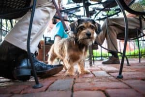 Check out our list of pet-friendly places to take your dog!