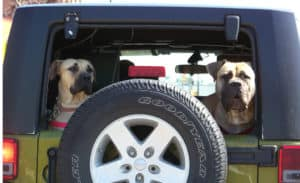 Ready for a ride with your furry friend?