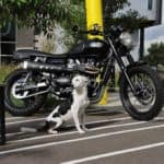 Triumph with doggo