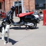 Vespa with dog