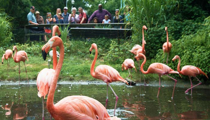 People standing on bridge at Bronx Zoo watching flamingos in water