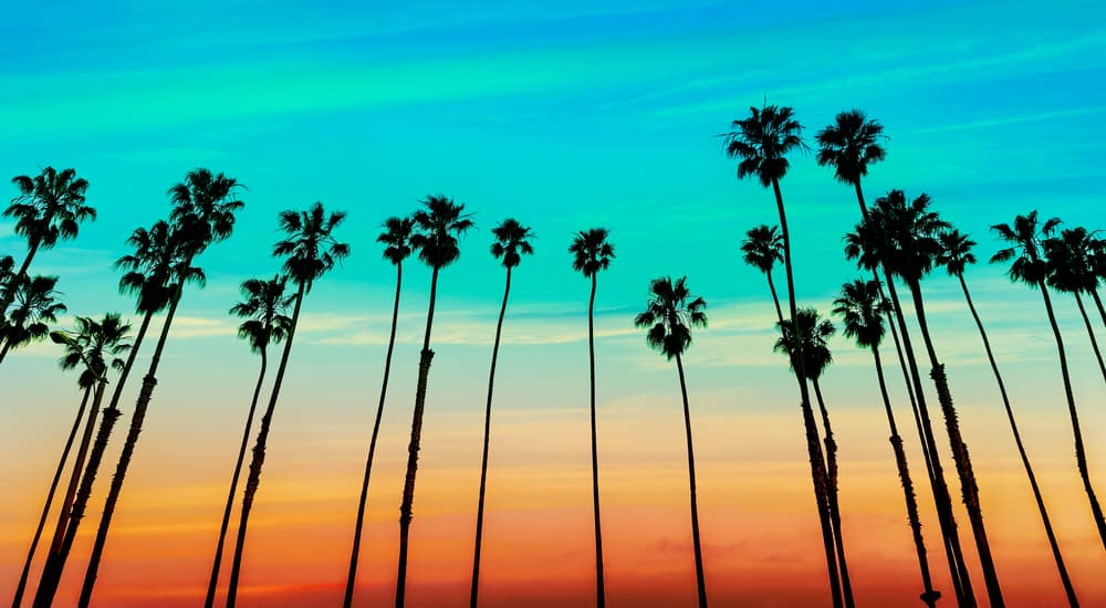 Sunset Palm tree rows