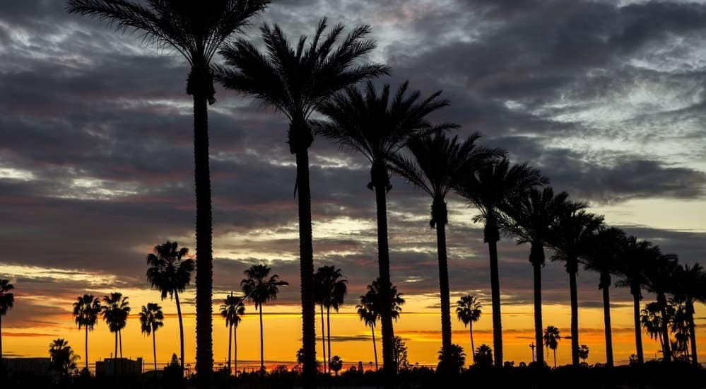 A row of plam trees in Orange County are shown at dusk.